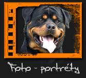 Portréty psů