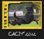 CACIT 2012